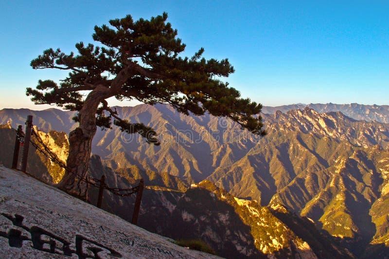 Huashan(Mountain Huashan)-Pinus armandii(Chinese name Huashansong) stock photo
