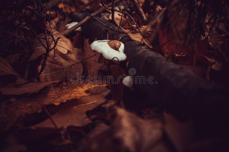 Hub su un albero nei colori molto piacevoli di una foresta di autunno, fondo vago scuro immagine stock libera da diritti