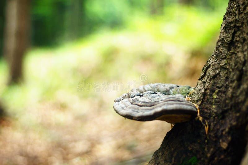 Hub su un albero nei colori molto piacevoli di una foresta di estate, fondo molto vago luminoso fotografia stock libera da diritti