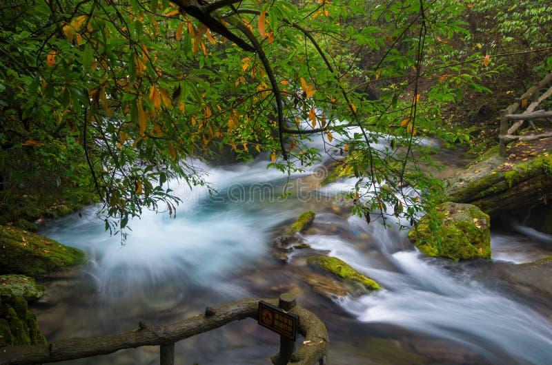 ShenNongJia xiangxiyuan. Hubei shennongjia scenic spot.Shennongjia forest region: to manifest the precious value of ecological protection and green development stock photos