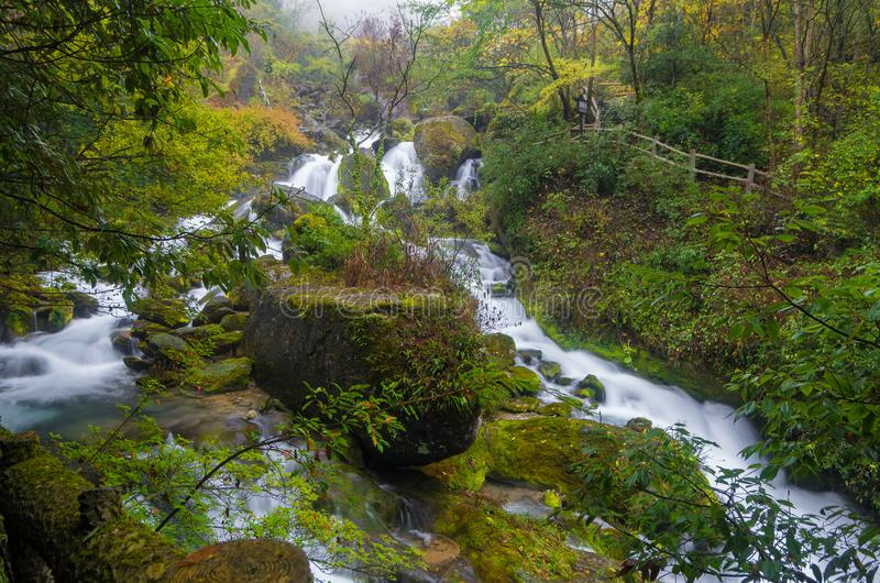 ShenNongJia xiangxiyuan. Hubei shennongjia scenic spot.Shennongjia forest region: to manifest the precious value of ecological protection and green development stock photo