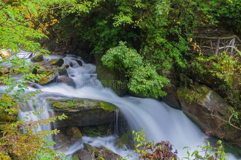 ShenNongJia xiangxiyuan. Hubei shennongjia scenic spot.Shennongjia forest region: to manifest the precious value of ecological protection and green development stock photography