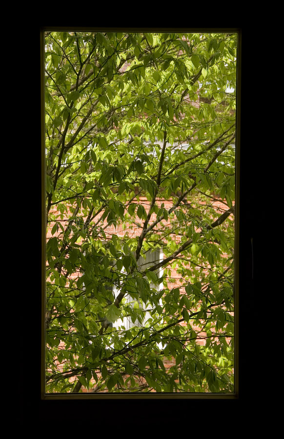 Download Hublot de source image stock. Image du verdure, arbre, vert - 745463
