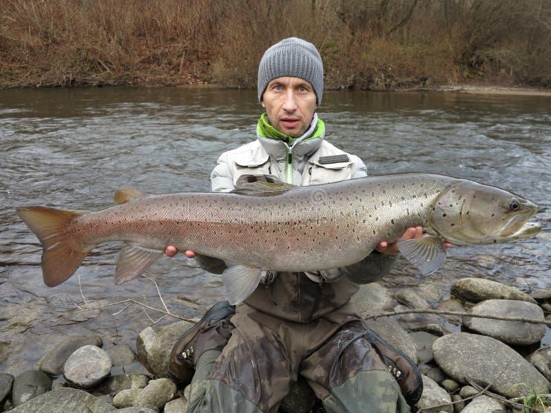 Hucho σολομών Δούναβη που αλιεύει στην κεντρική Ευρώπη στοκ φωτογραφίες