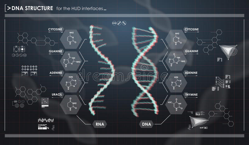 HUD infographic elements with DNA structure. Futuristic user interface. Abstract virtual graphic. Futuristic user interface. Abstract virtual graphic vector illustration
