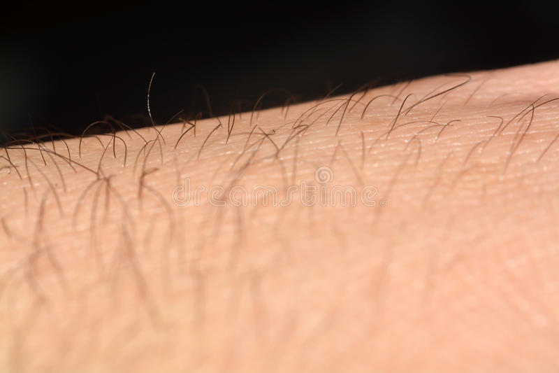 Hud med hår i makro arkivfoto