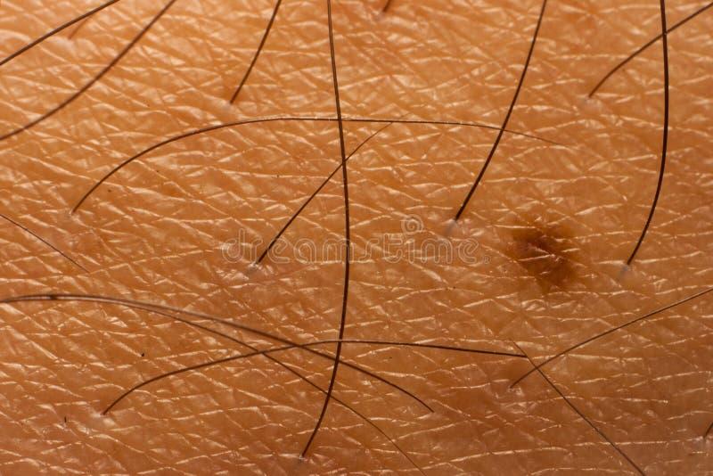 Hud- och kropphårtextur royaltyfri bild