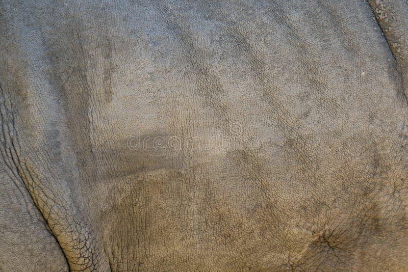 Hudtextur av en noshörning arkivbild