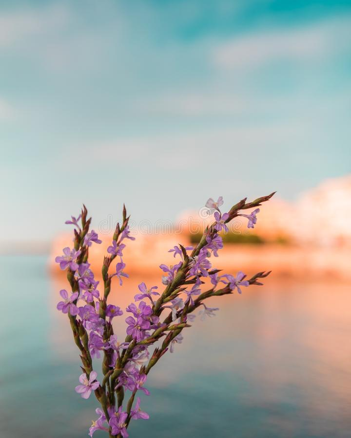 Hue shifted photo of purple tamarix flowers against blurred background of sky sea and coast. Hue shifted photo of purple tamarix flowers against a blurred royalty free stock images