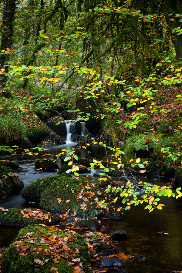 Download Huelgoat forest stock photo. Image of park, creek, tranquility - 23647922