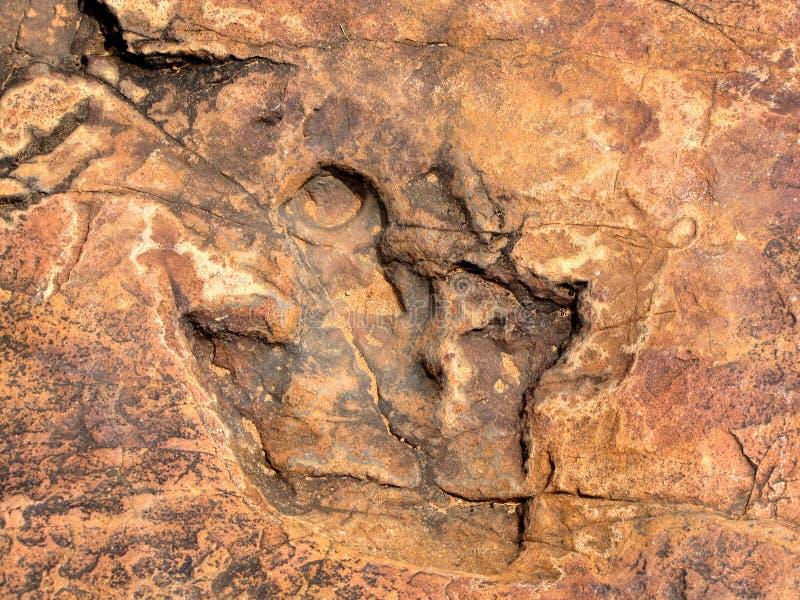 Huella del dinosaurio imagen de archivo libre de regalías