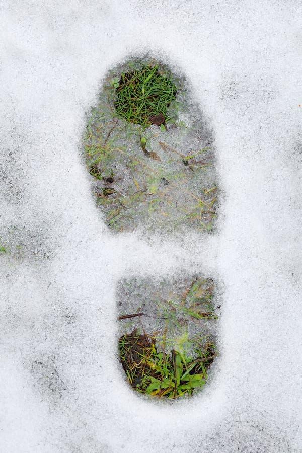 Huella e hierba verde debajo de la nieve foto de archivo