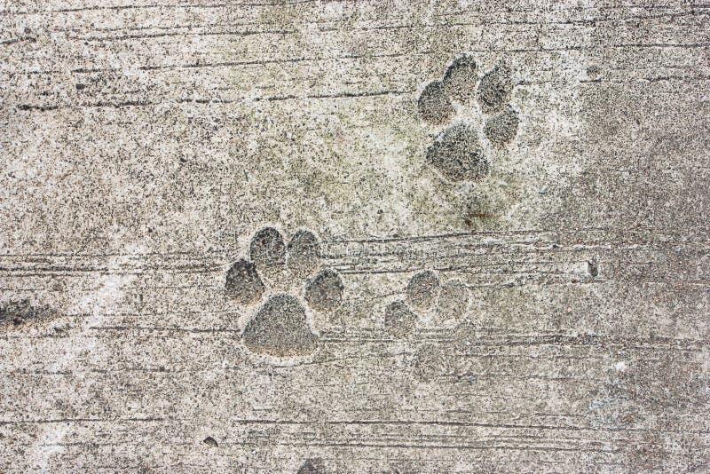 Huellas concretas del perro imágenes de archivo libres de regalías