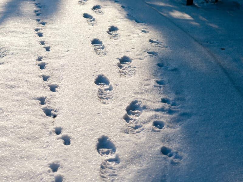Huellas de las botas del zapato en nieve fotografía de archivo libre de regalías