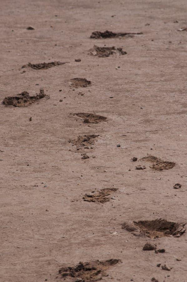Huellas del fango imagenes de archivo