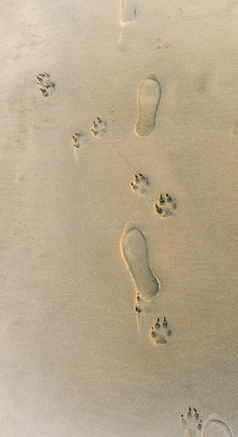 Huellas en la arena imagenes de archivo