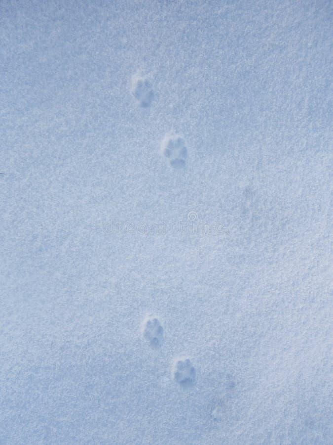 Huellas en la nieve imagen de archivo libre de regalías