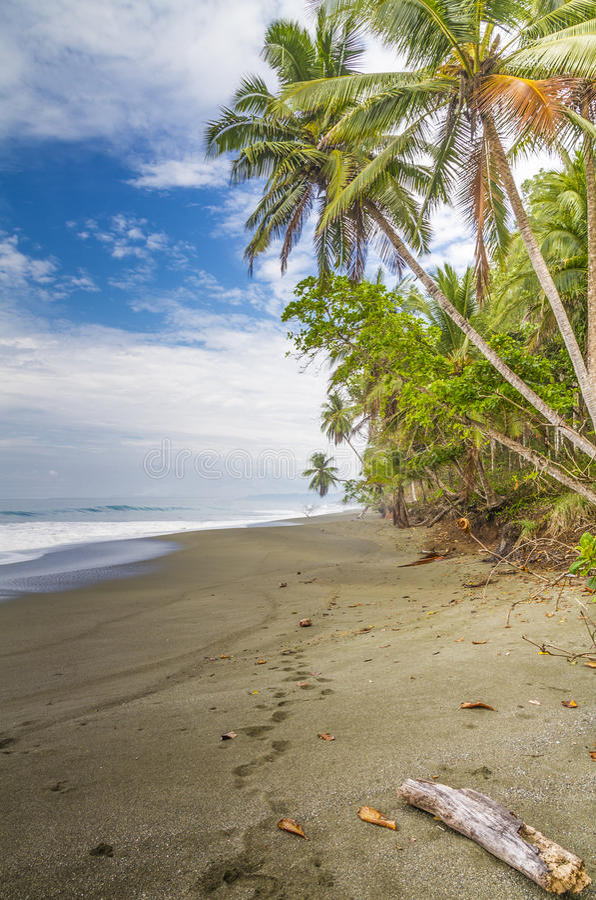 Huellas en una playa franjada palma tropical imagen de archivo