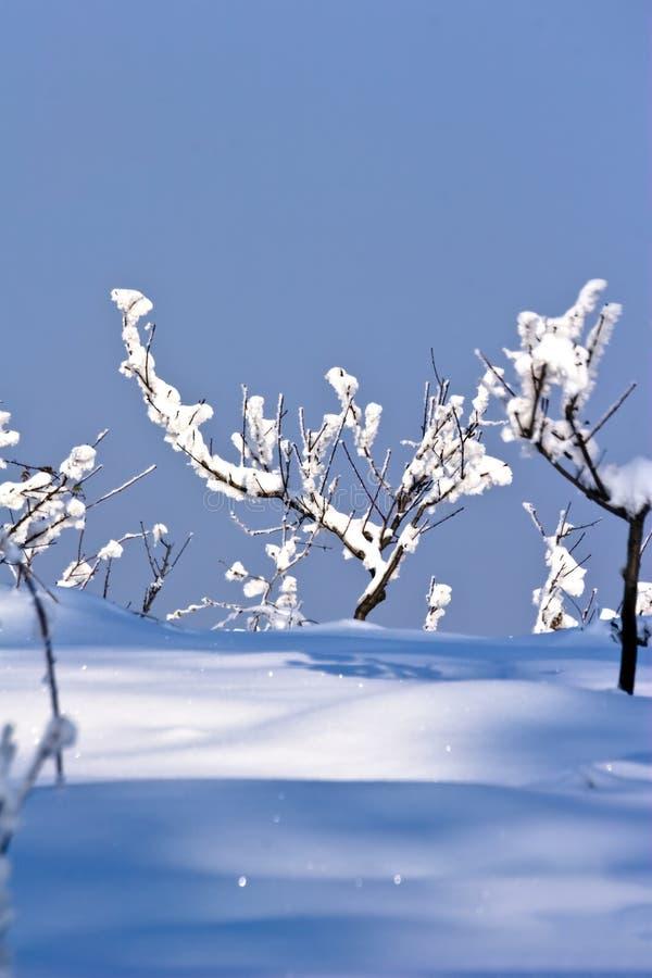 Huerta de fruta en invierno fotografía de archivo libre de regalías