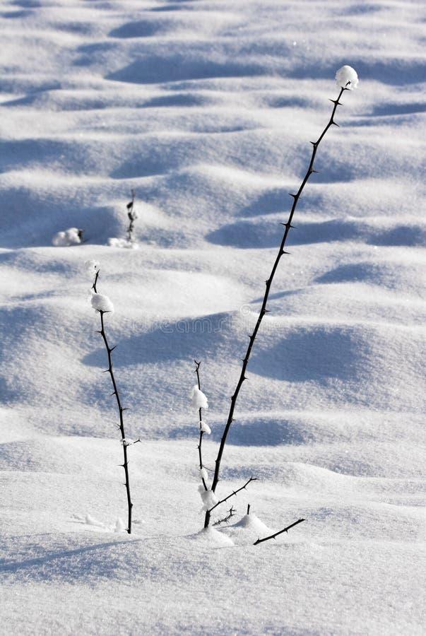 Huerta de fruta en invierno imagen de archivo
