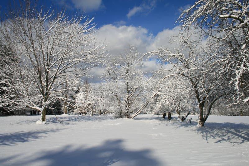 Huerta del invierno fotografía de archivo