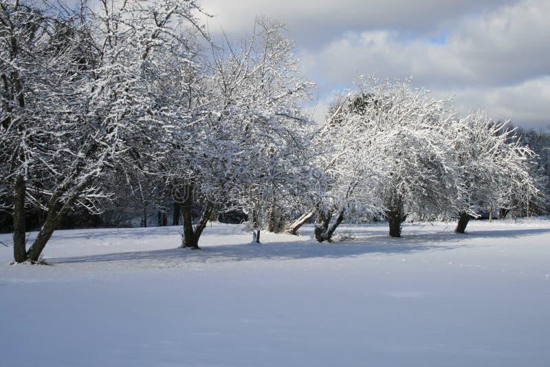 Huerta del invierno imagen de archivo libre de regalías