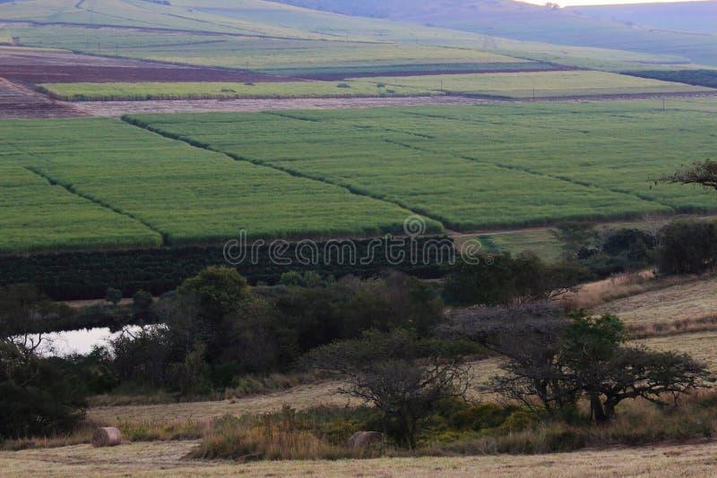 Huerta del valle foto de archivo libre de regalías