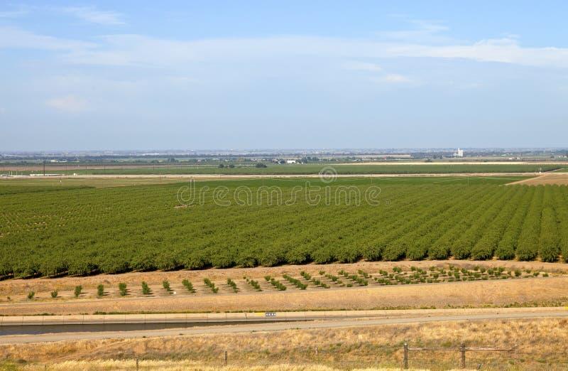 Huertas centrales de California. imagen de archivo