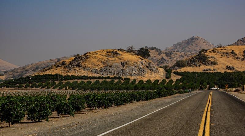 Huertas de la fruta cítrica en California meridional imagen de archivo libre de regalías