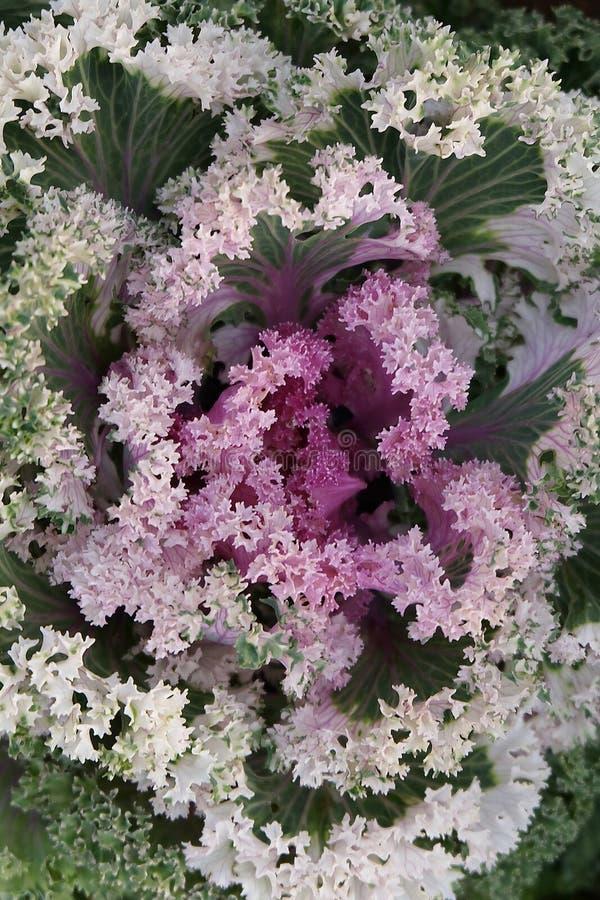 Huerto en verano Hierbas, flores Eco cómodo cabbag foto de archivo