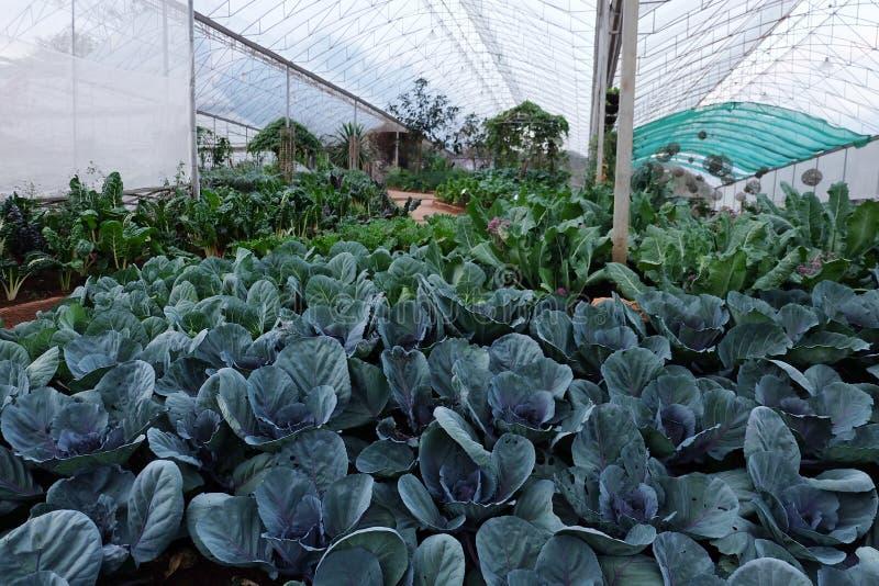 Huerto en verano Hierbas, flores Eco cómodo cabbag fotos de archivo