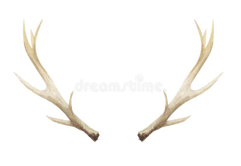 Hueso de los cuernos del macho de los ciervos de las astas de la acuarela pintado ilustración del vector