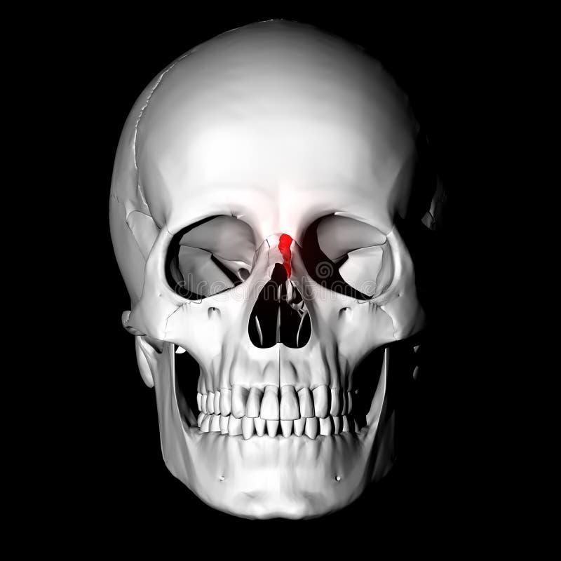 Hueso nasal stock de ilustración. Ilustración de huesos - 8016244