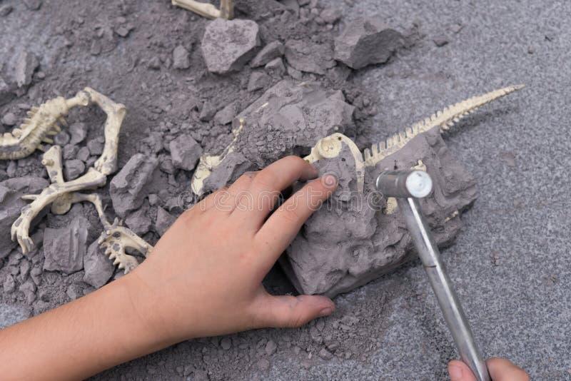 Huesos de dinosaurio de excavación del niño foto de archivo