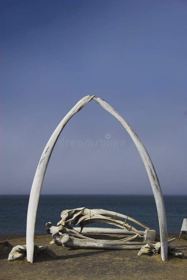 Huesos de la ballena foto de archivo