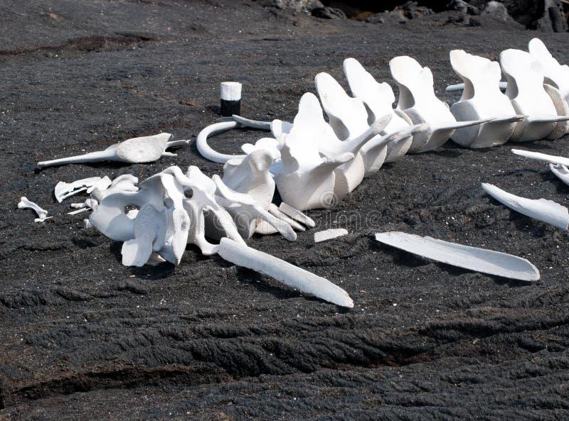 Huesos de la ballena en la arena negra fotografía de archivo libre de regalías