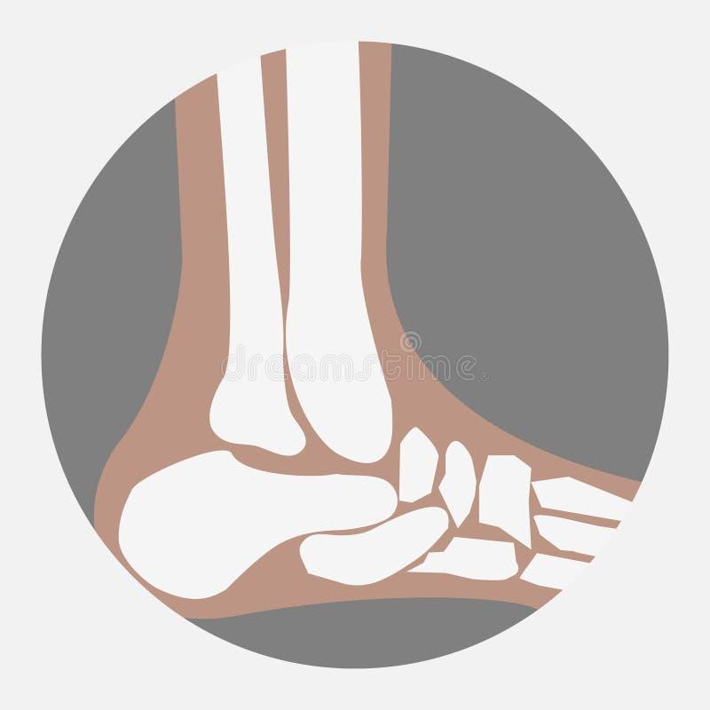 Huesos de pie humano ilustración del vector. Ilustración de tobillo ...