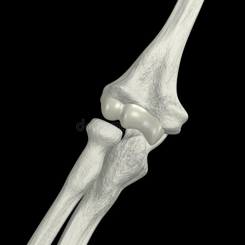 Huesos del codo stock de ilustración. Ilustración de salud - 3033513