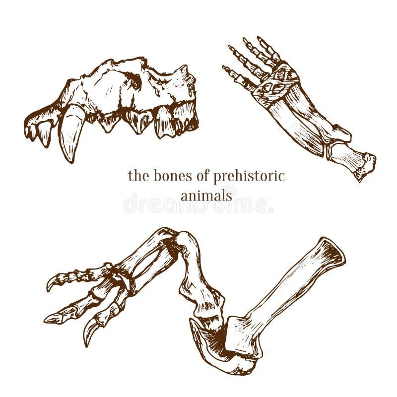 Huesos prehistóricos incompletos de animales Excavaciones de la arqueología Ilustración del vector libre illustration