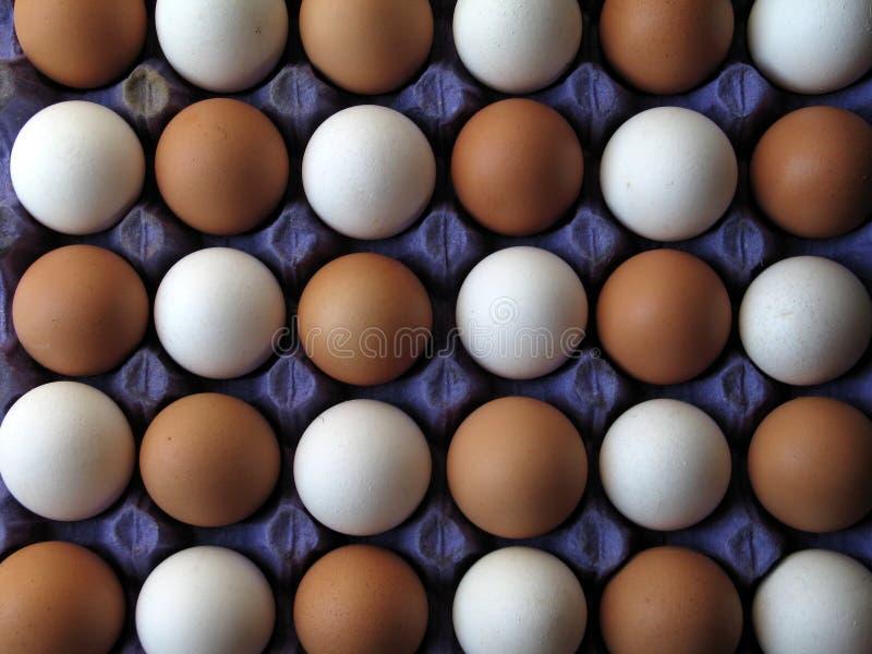 Download Huevo imagen de archivo. Imagen de treinta, modelo, huevos - 181873