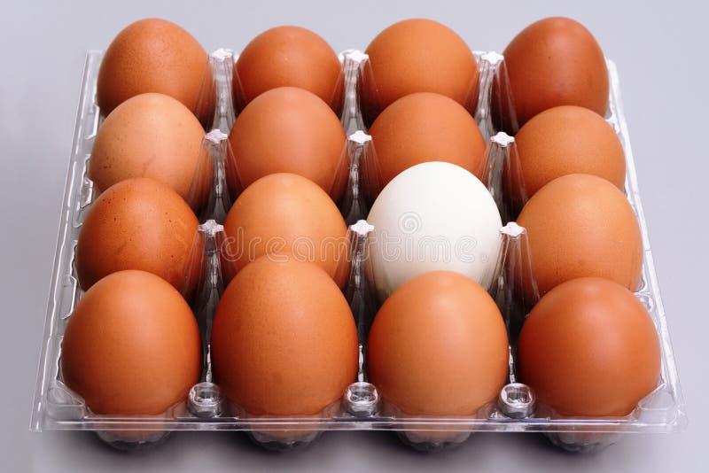 Huevo blanco en caja plástica de los huevos marrones del pollo en concepto gris del fondo, de pascua y de la diferencia imagen de archivo libre de regalías
