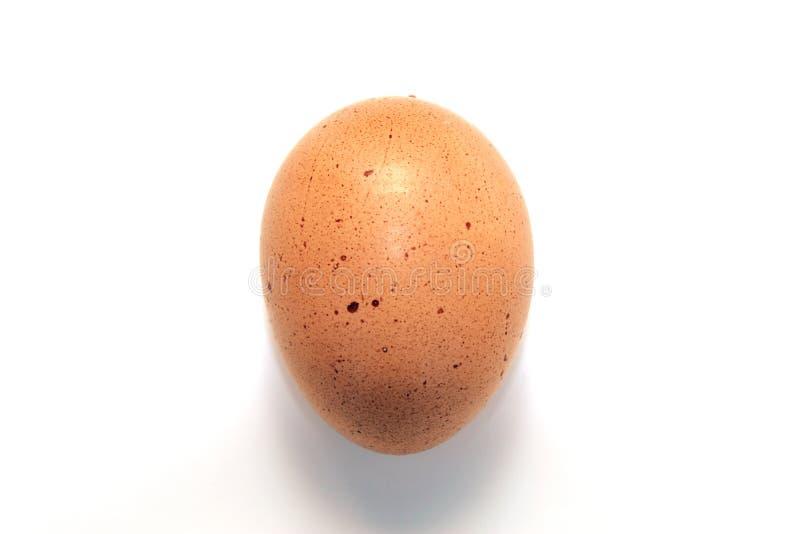 Huevo de Brown imagen de archivo libre de regalías