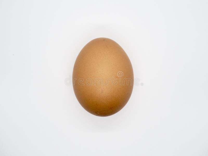 Huevo de Brown del pollo con el fondo blanco fotos de archivo