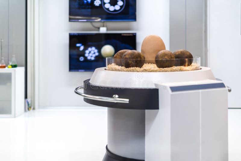 Huevo de dinosaurio en el laboratorio de ciencia de la paleontología imágenes de archivo libres de regalías
