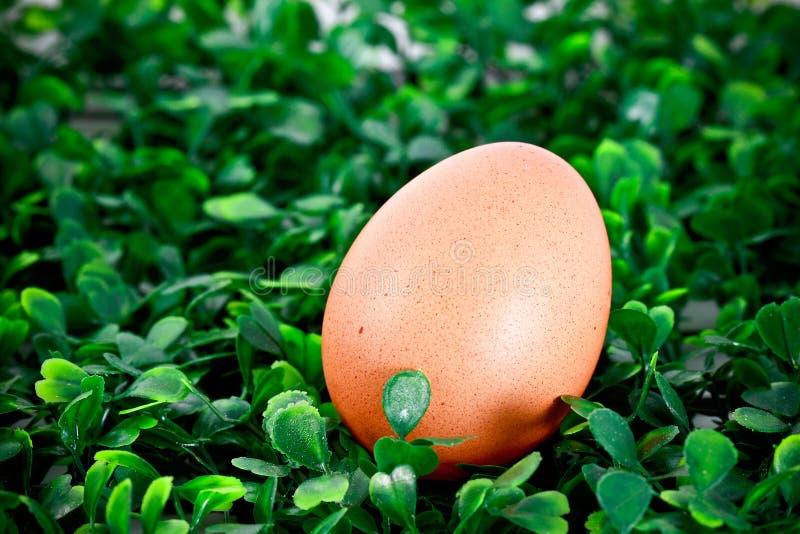 Huevo de gallina en fondo herboso imagen de archivo libre de regalías