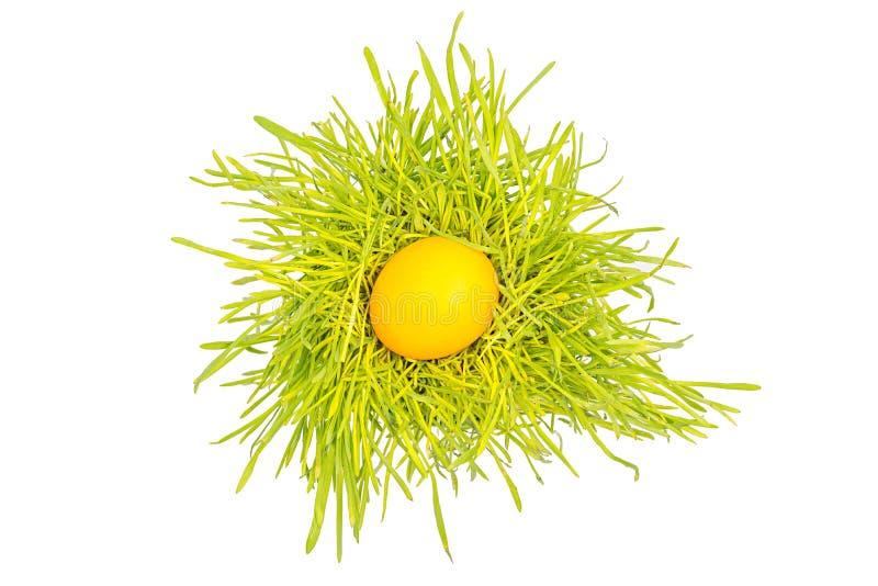 Huevo de Pascua en la hierba fotografía de archivo