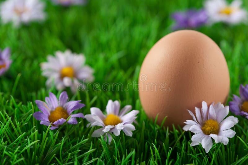 Huevo de Pascua en prado con las flores imagen de archivo