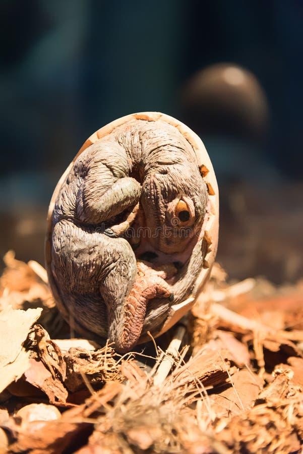 Huevo de Petrifacted del dinosaurio imagen de archivo