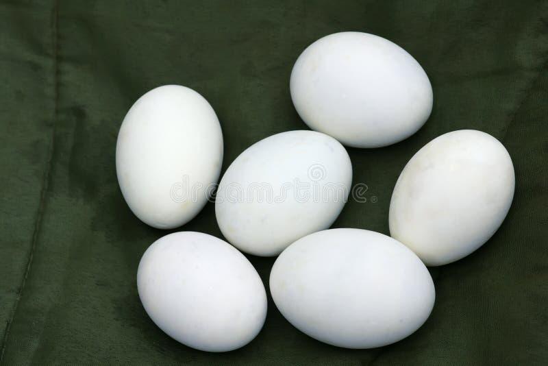 Huevo del pato imágenes de archivo libres de regalías