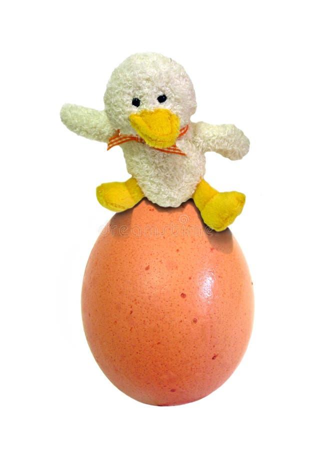 Huevo del pato imagenes de archivo